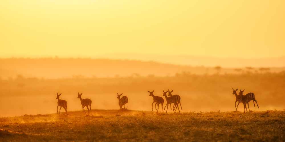 A piece of fine art art photography titled Towards Sunset by John Fan