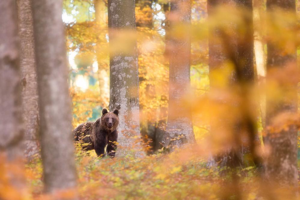 A piece of fine art art photography titled Wilderness by Sebastian Mastahac