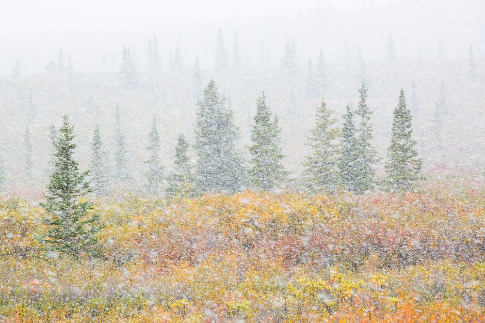 A piece of fine art art photography titled Alaska Autumn by Alessandro Carboni