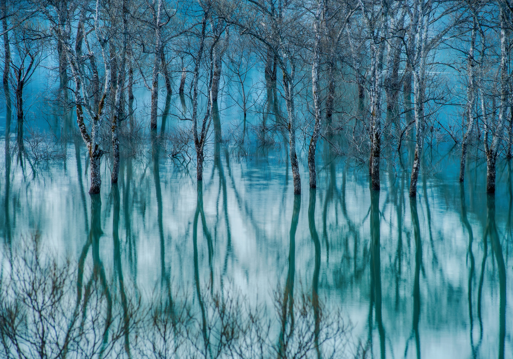 A piece of fine art art photography titled Water Trees by Kazuaki Koseki