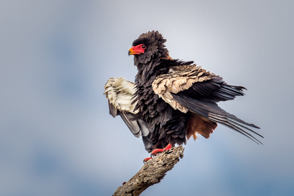 A piece of fine art art photography titled Ruffled Feathers by Jeffrey C. Sink