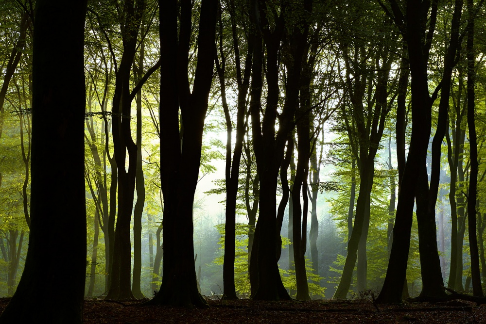 A piece of fine art art photography titled Enchanted Forest by Loulou Beavers