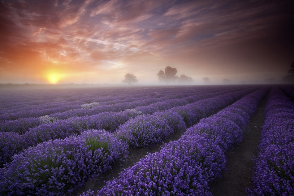 A piece of fine art art photography titled Lavender Sunrise by Antony Spencer