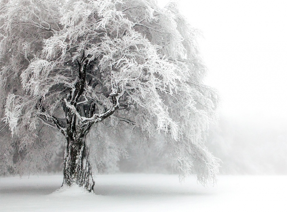 A piece of fine art art photography titled Cold As Ice by Ralf Greiner