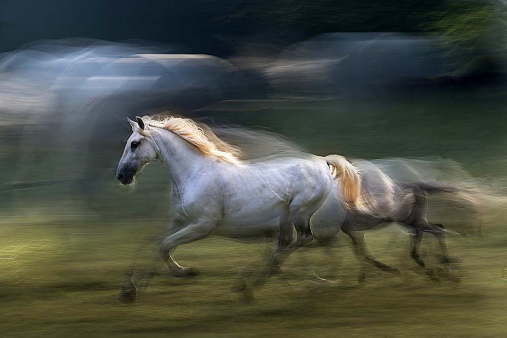A piece of fine art art photography titled White Mare Into a Gallop by milan malovrh