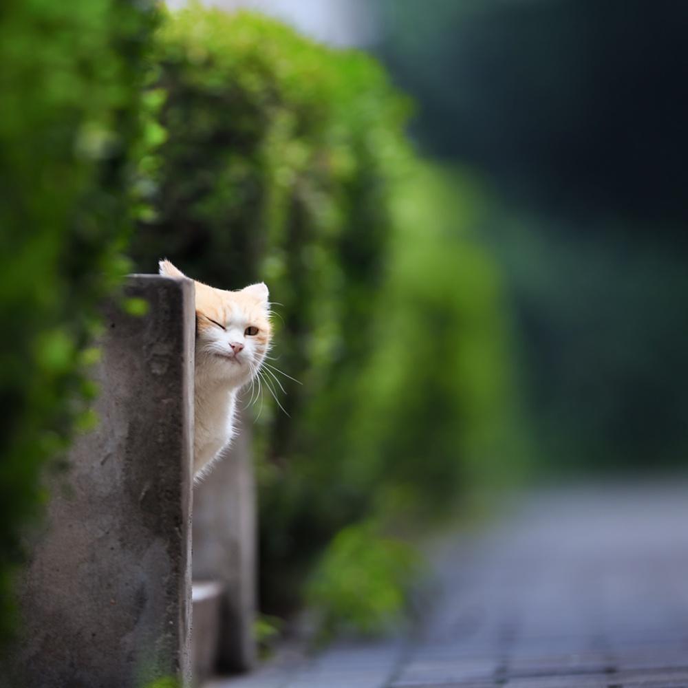 Hi, you
