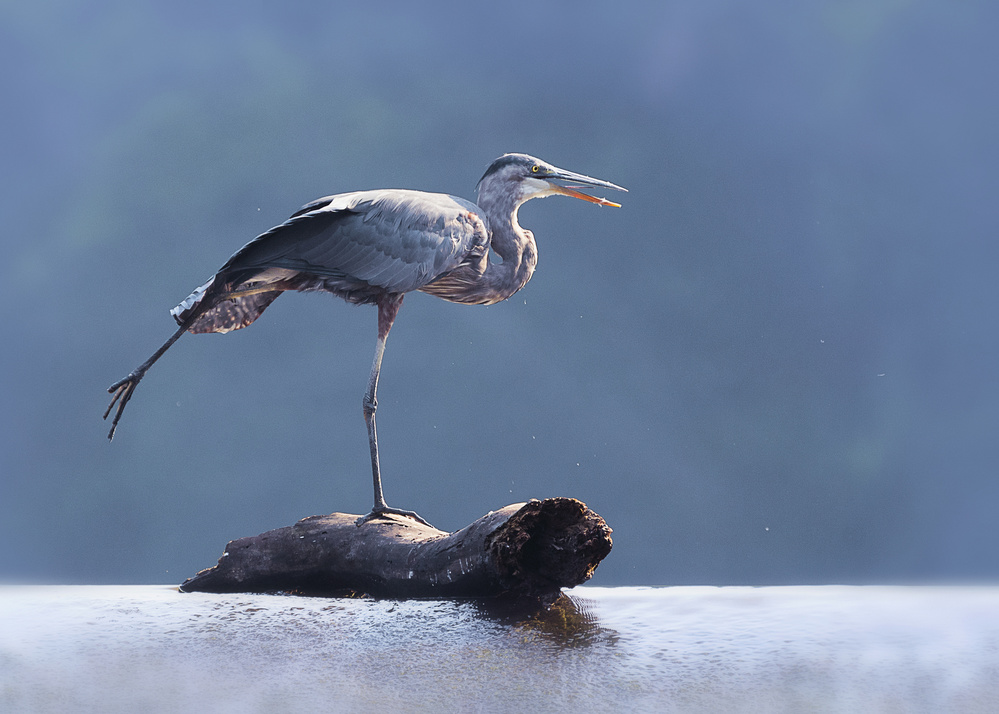 A piece of fine art art photography titled Blue Heron Doing Yoga by Purple Bamboo