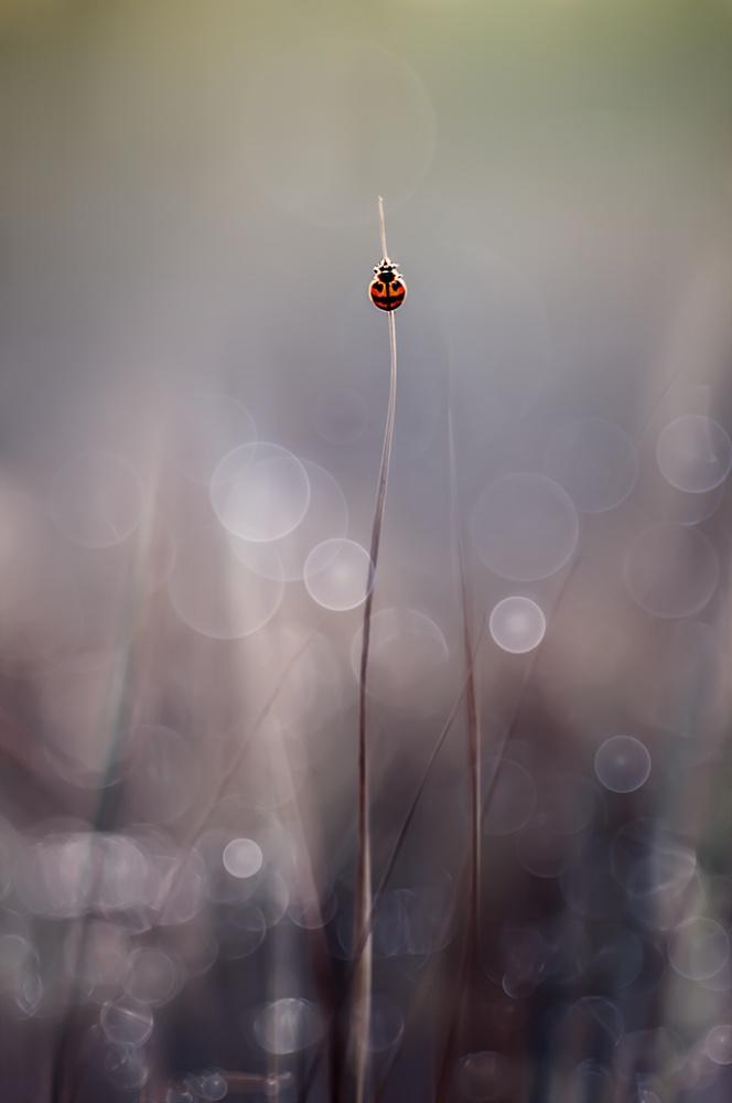 A piece of fine art art photography titled Menuju Puncak by Edy Pamungkas