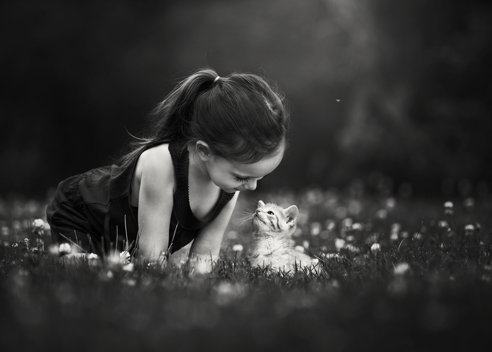 A piece of fine art art photography titled Soft Kitty by Suzy Mead