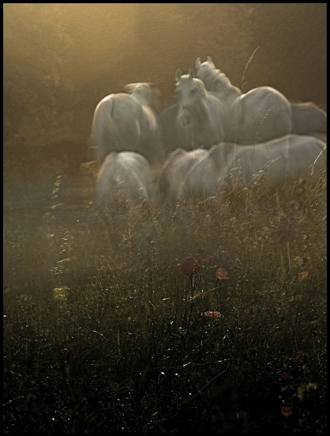 A piece of fine art art photography titled Theirs Garden by milan malovrh