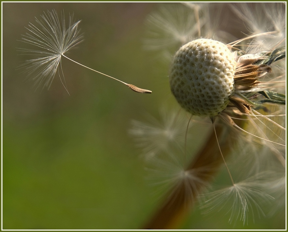A piece of fine art art photography titled Fly Away by Paula Loonen