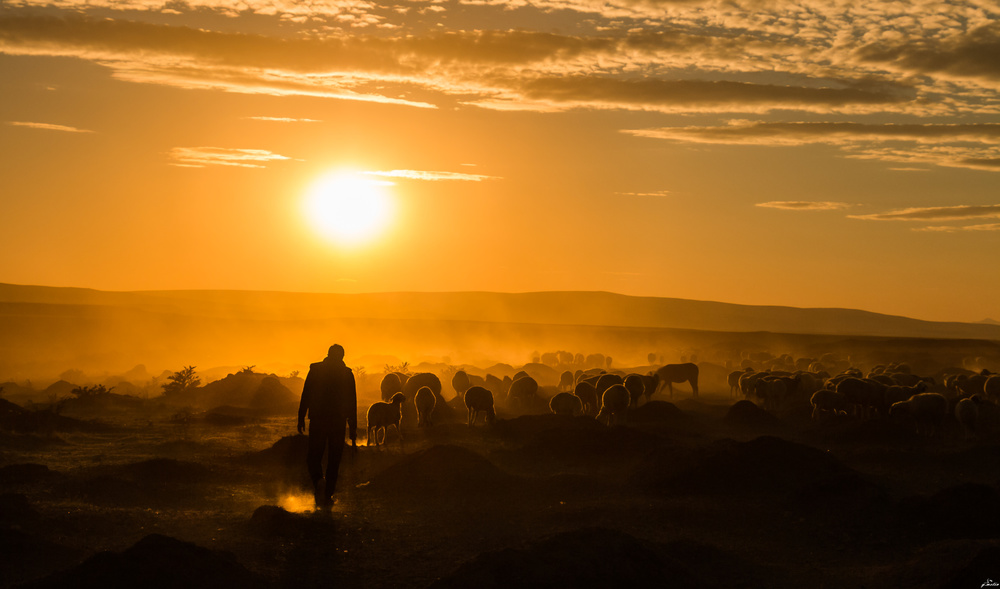 A piece of fine art art photography titled Shepherd and Herd by yasarmetin
