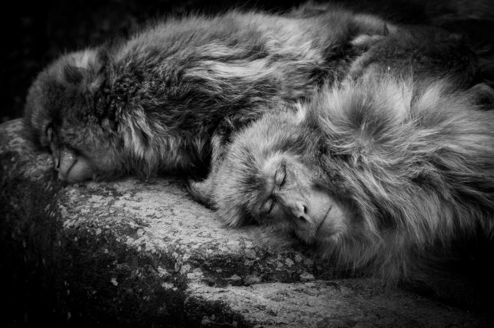 A piece of fine art art photography titled Sleeping by Akihiro Shibata