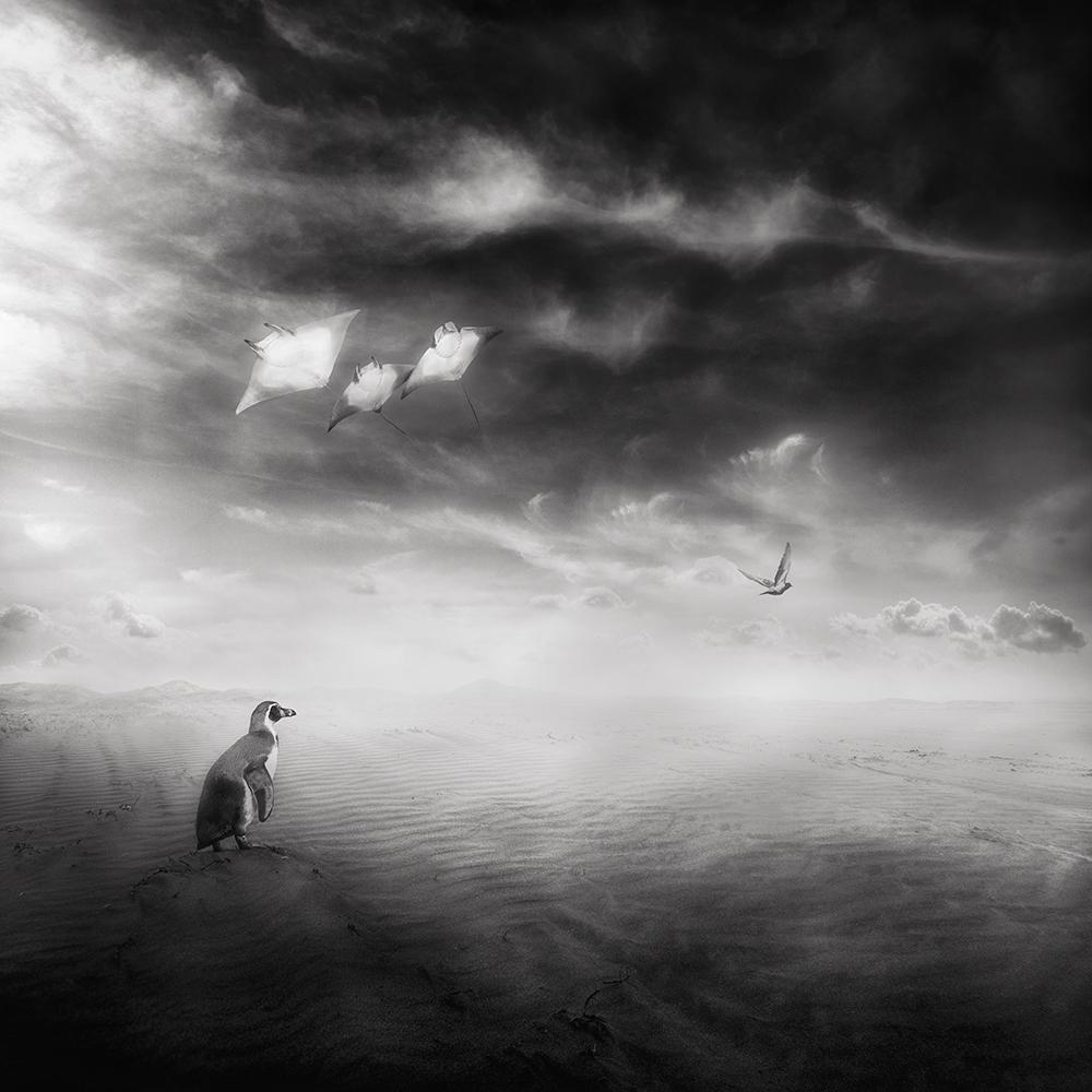 A piece of fine art art photography titled Untitled by Sherry Akrami