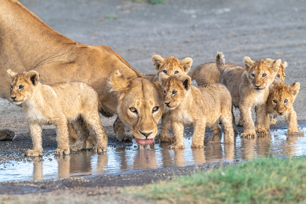 At the watering hole.