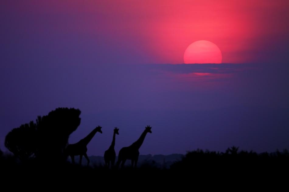 A piece of fine art art photography titled Sunrise In Uganda by Nicolás Merino