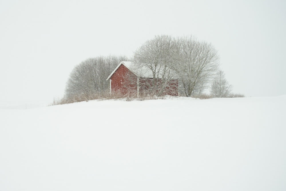 Little red shed in heavy snowfall