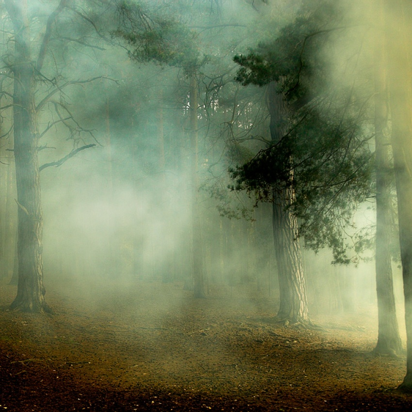 A piece of fine art art photography titled Horsell Common by David Baker