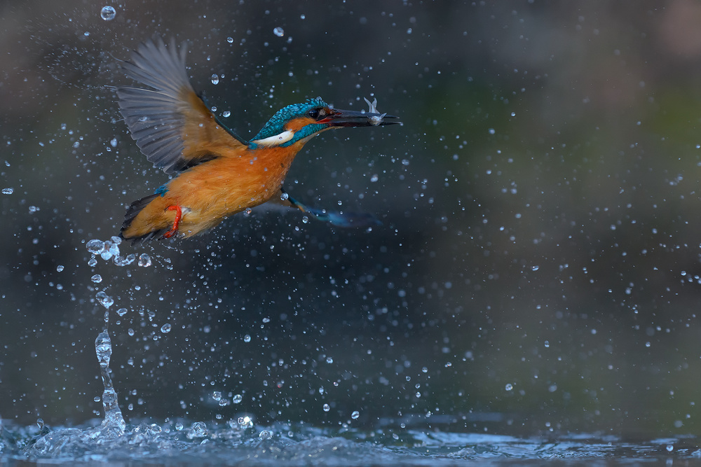 A piece of fine art art photography titled Fishing at First Light by Alessandro Rossini