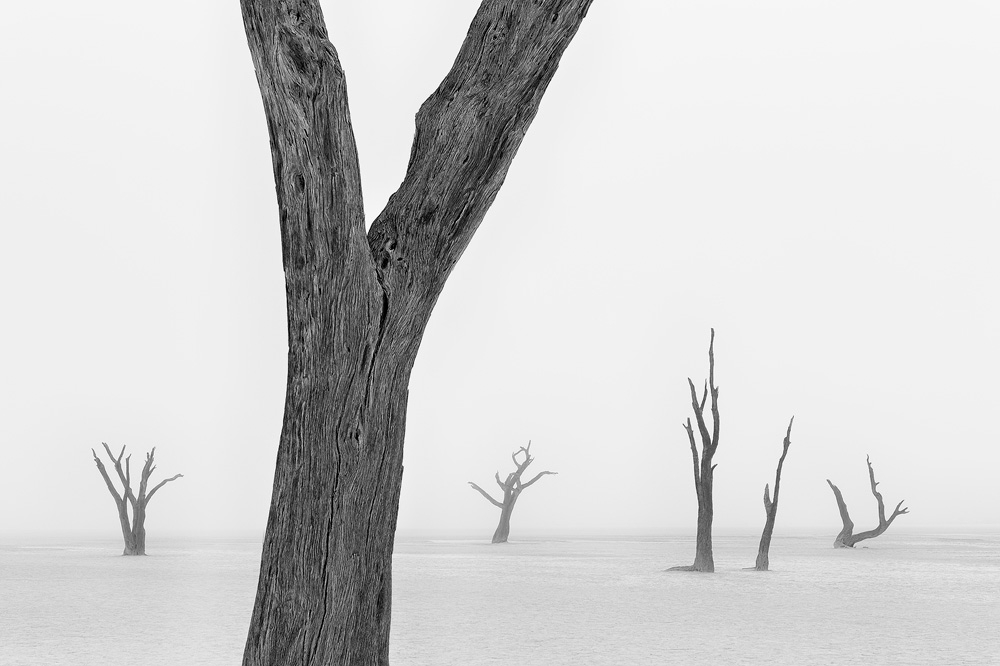 A piece of fine art art photography titled Beyond the Veil of Death I by Marsel van Oosten