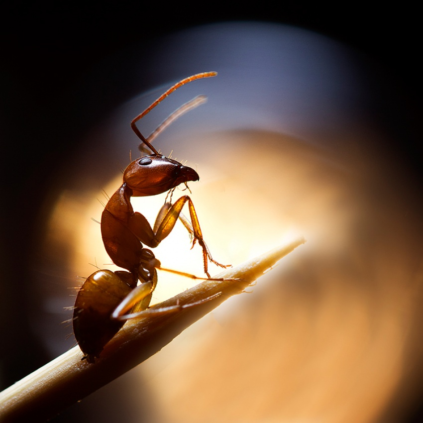 A piece of fine art art photography titled Super Ant by Basheer Sheick-Yousif