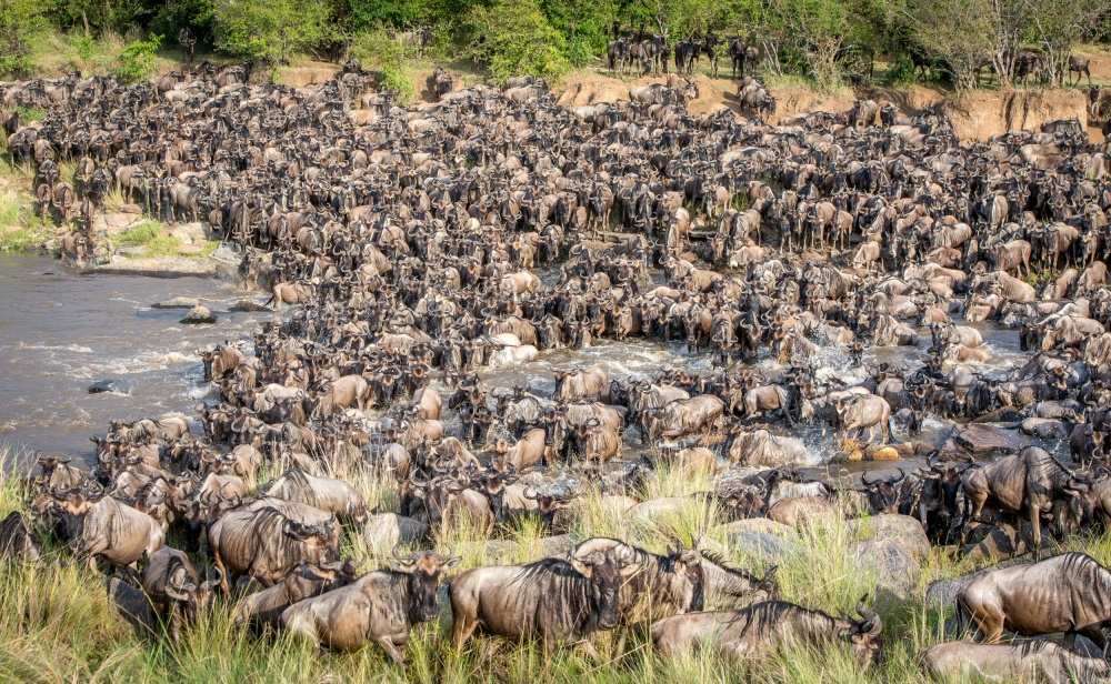 A piece of fine art art photography titled The Amazing Great Migration by Jeffrey C. Sink
