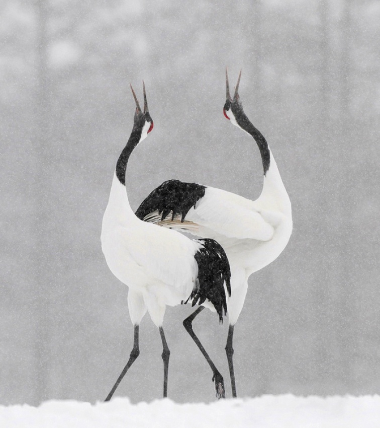A piece of fine art art photography titled Snow Dance by Harry Eggens