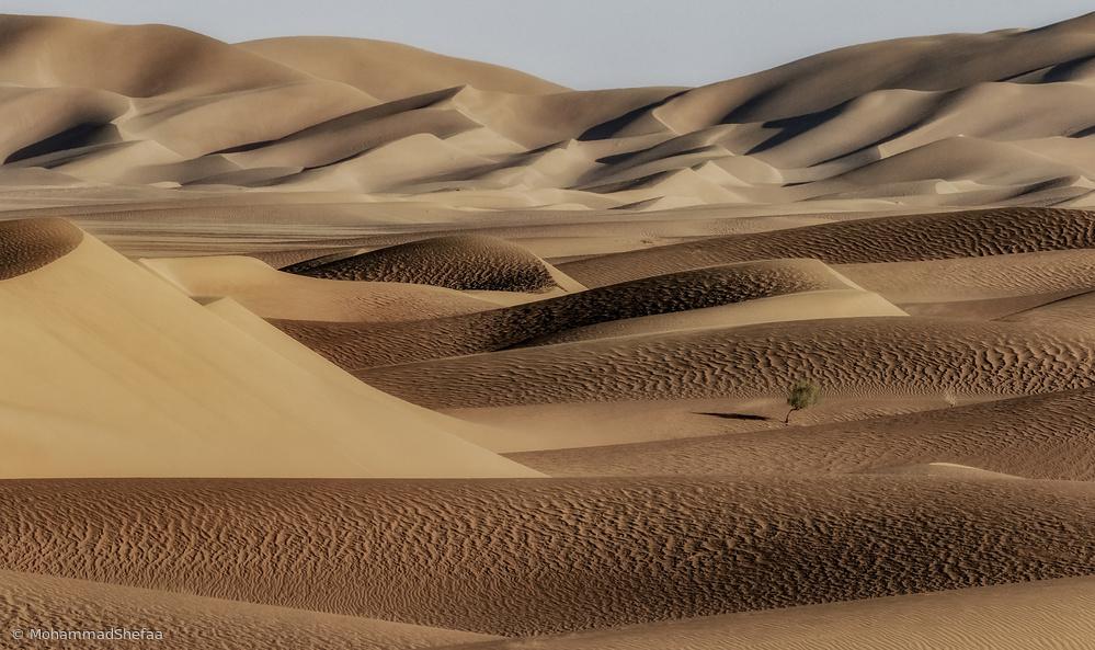 A bush between the desert