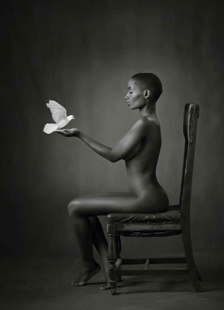 A piece of fine art art photography titled Ebony Dove by Ross Oscar