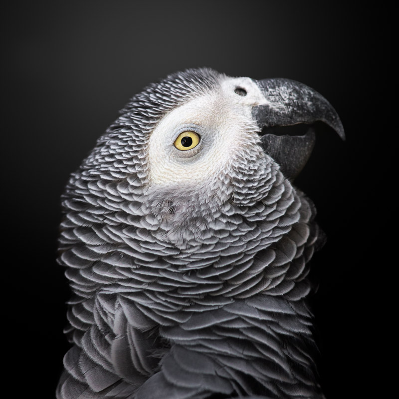 The Colorful Grey