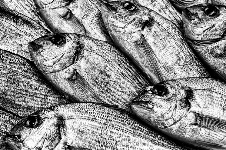 A piece of fine art art photography titled Fresh Fish by FQE