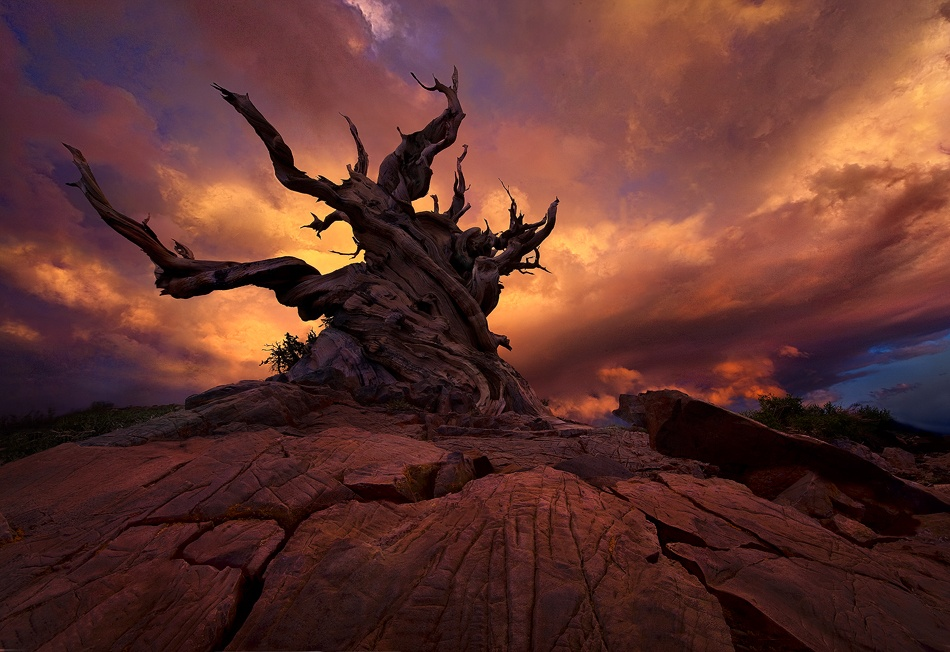 A piece of fine art art photography titled Rider of the Tempest by Marc Adamus