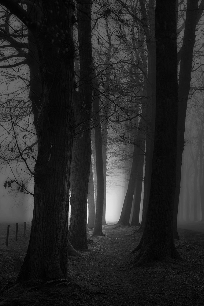 Foggy mystery forest
