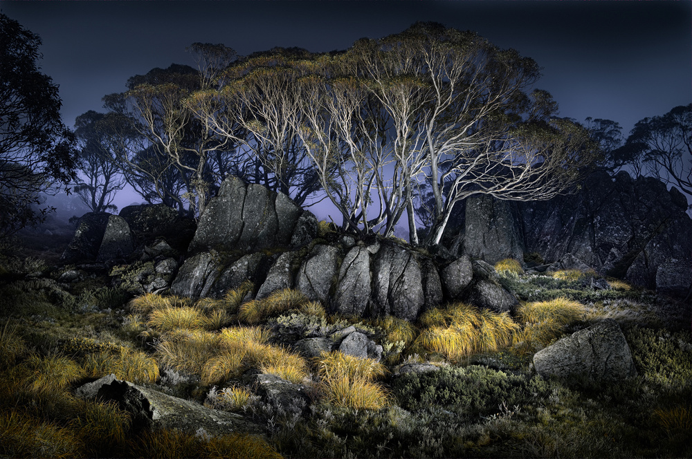 A piece of fine art art photography titled Button Grass - Charlotte's Pass by Francis Keogh