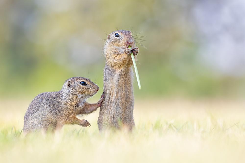 A piece of fine art art photography titled Wanna Share? by Henrik Spranz