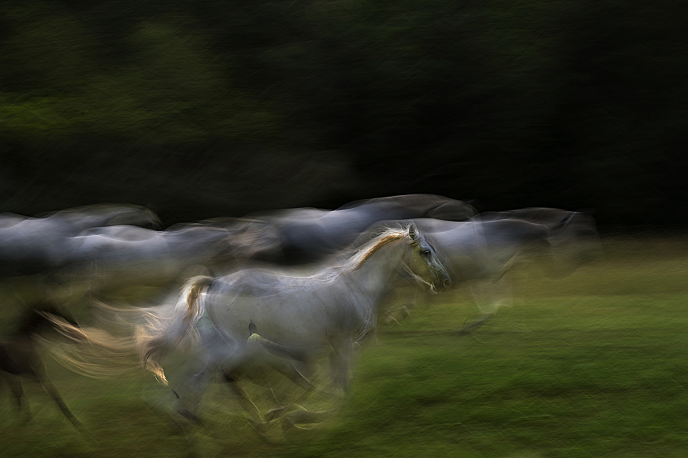 A piece of fine art art photography titled Galloping by milan malovrh
