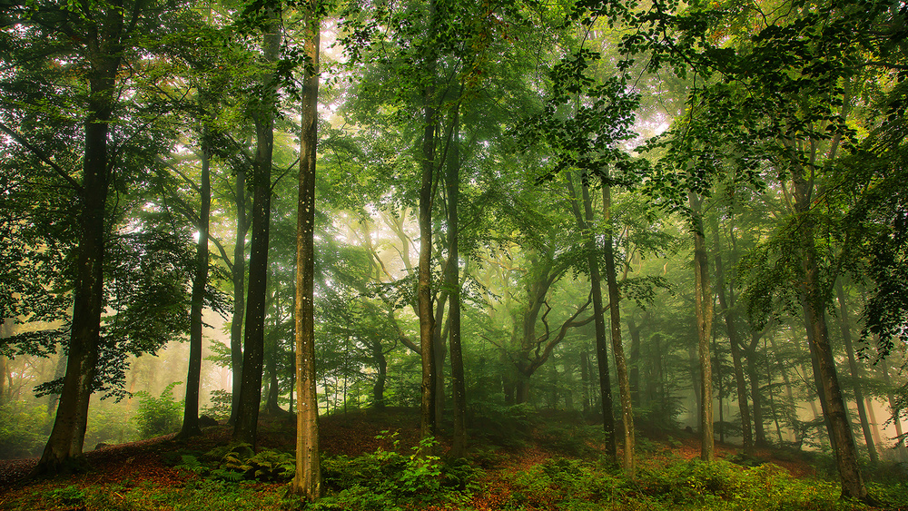 A piece of fine art art photography titled Welcome In the Forest by Leif Løndal