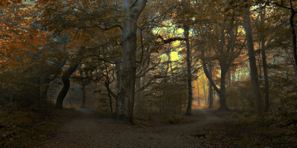 A piece of fine art art photography titled Which Path by Leif Løndal