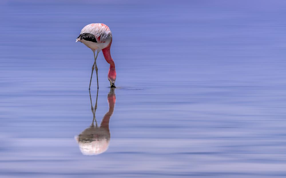 A piece of fine art art photography titled Atacama - Living Desert by Michael Jurek