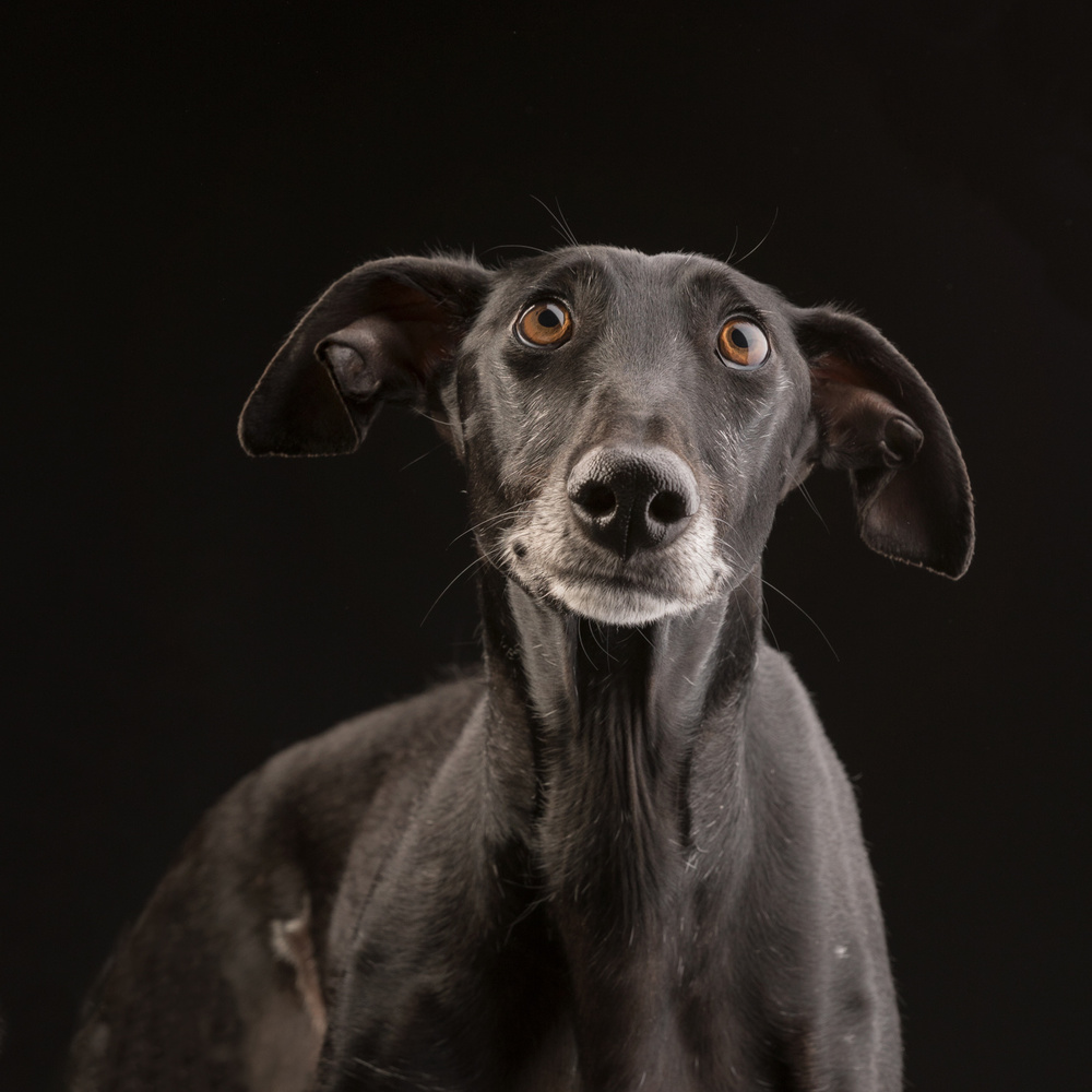 A piece of fine art art photography titled Dobby Look-a-like by Nuelle Flipse
