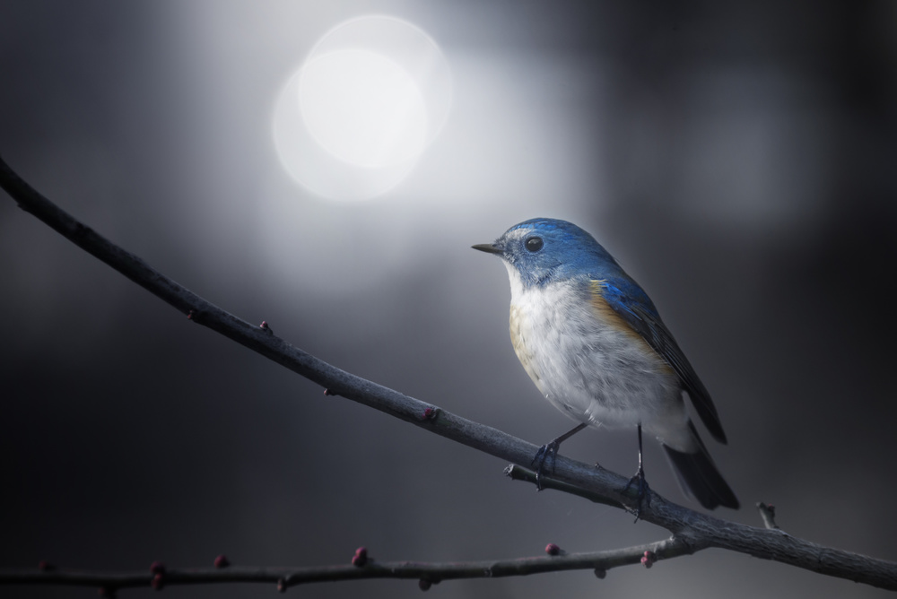 A piece of fine art art photography titled Blue Bird by Takashi Suzuki