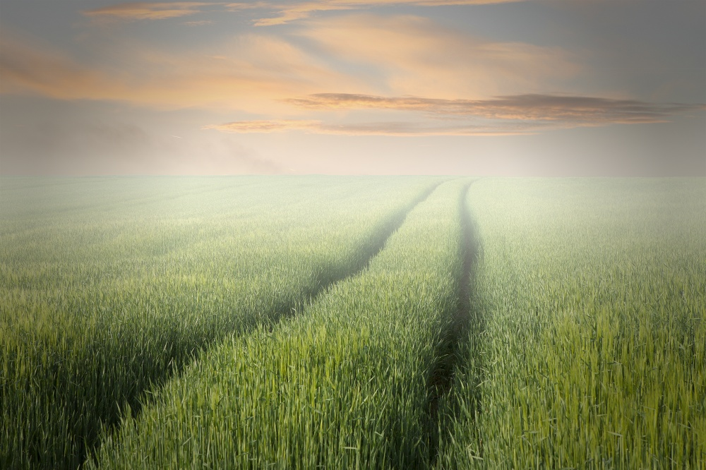 A piece of fine art art photography titled Foggy Morning by Rainer Mueller