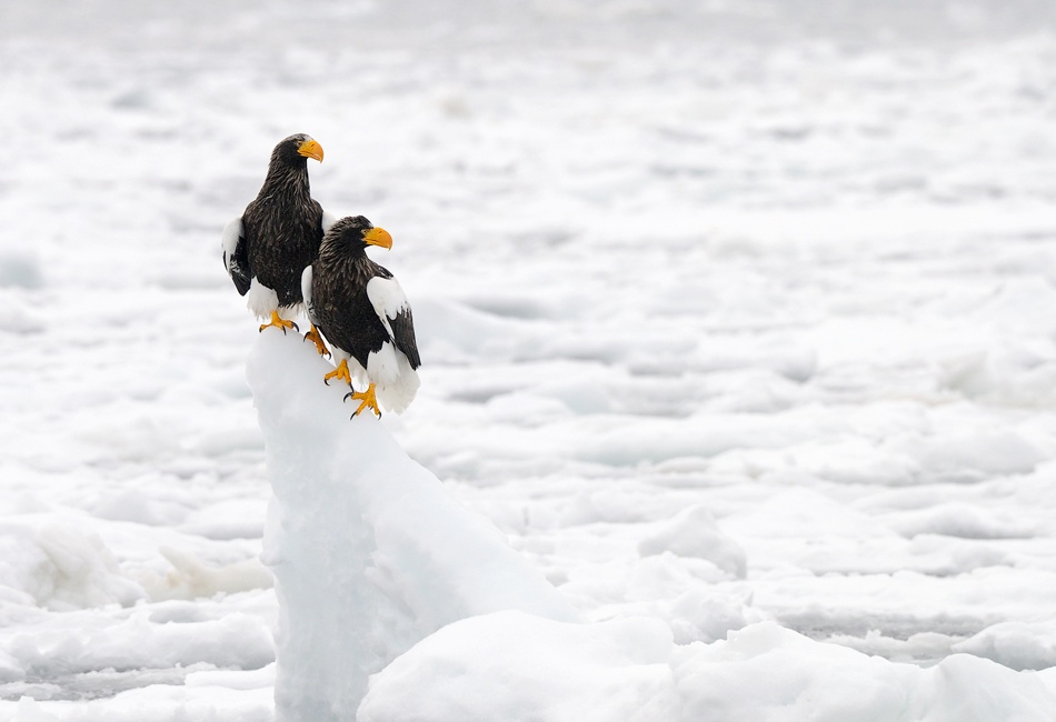 A piece of fine art art photography titled Alone On the Ice by Harry Eggens