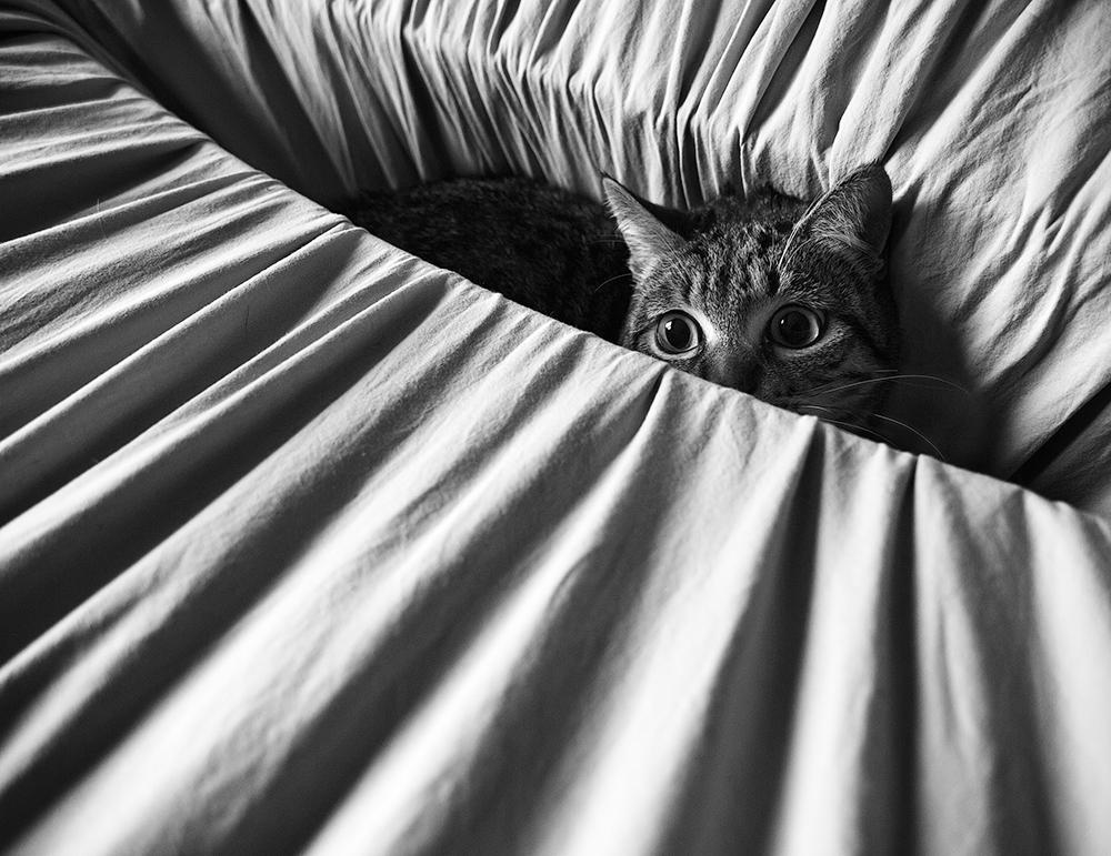 A piece of fine art art photography titled Cat On Alert by Ramón Espelt
