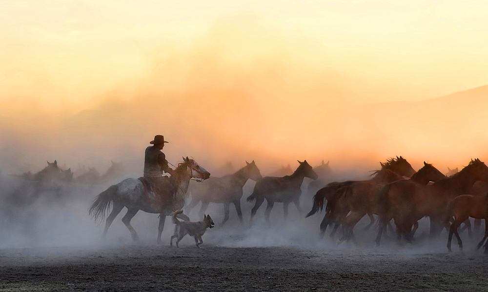 Wild horse collectors cowboys