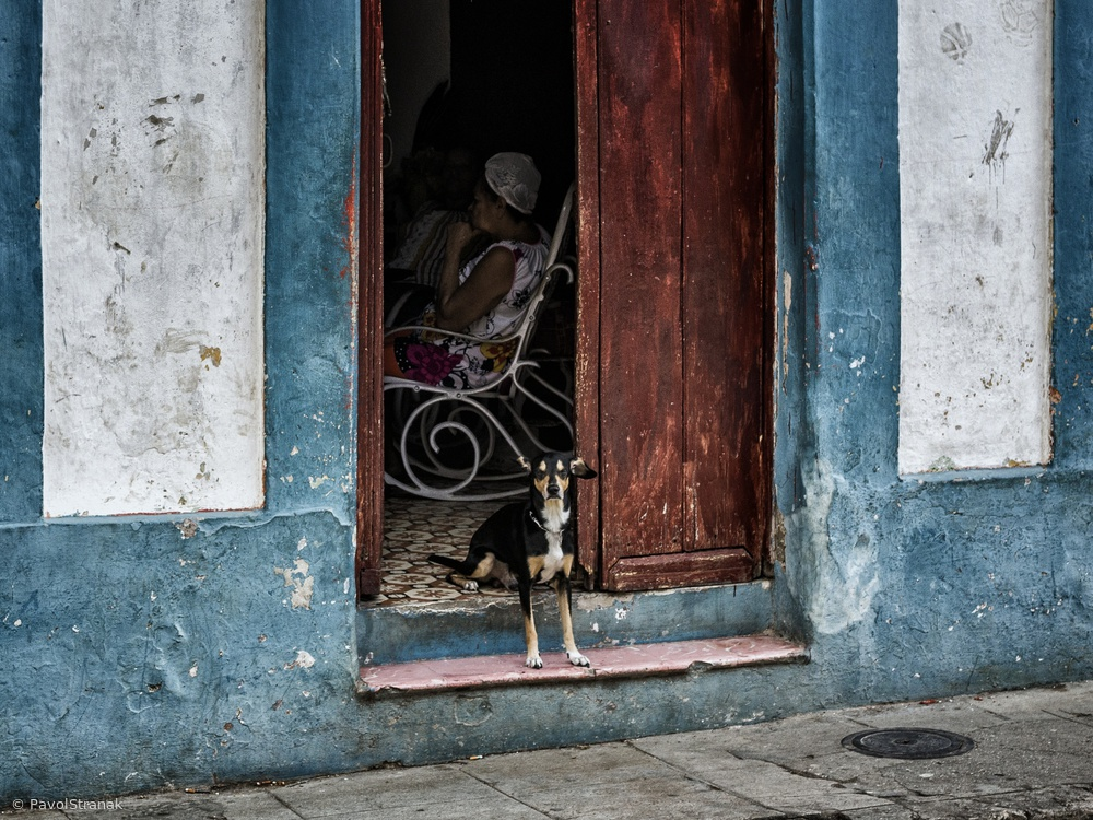 View this piece of fine art photography titled small guard dog by Lorenzo Grifantini