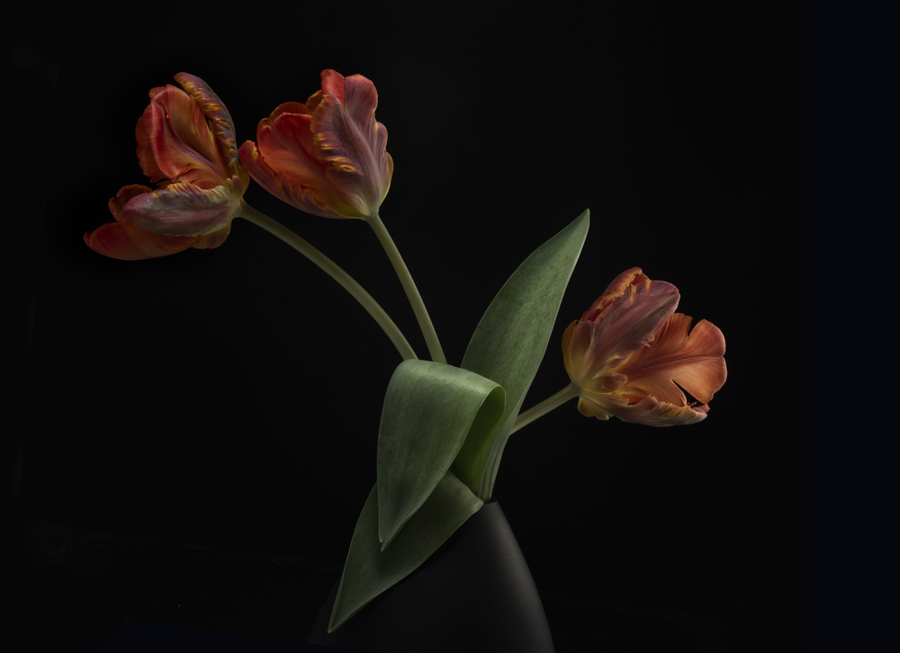 View this piece of fine art photography titled Tulips in vase by Lotte Grønkjær