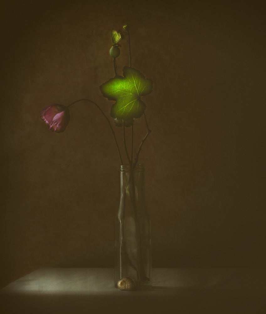 A piece of fine art art photography titled The Green Leaf by Delphine Devos