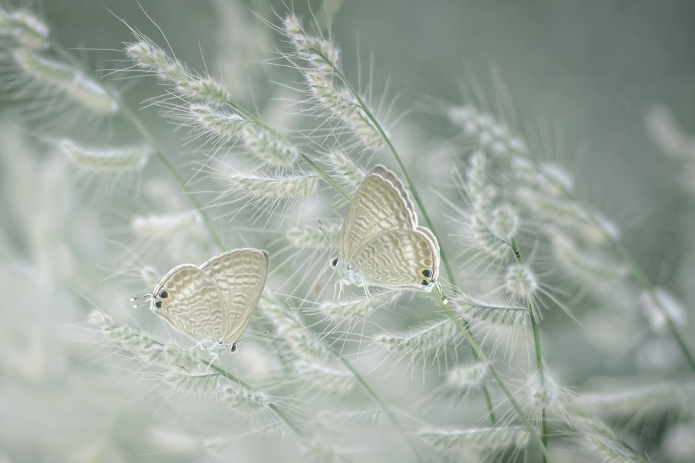 A piece of fine art art photography titled Afternoon Affair by Erwin Astro