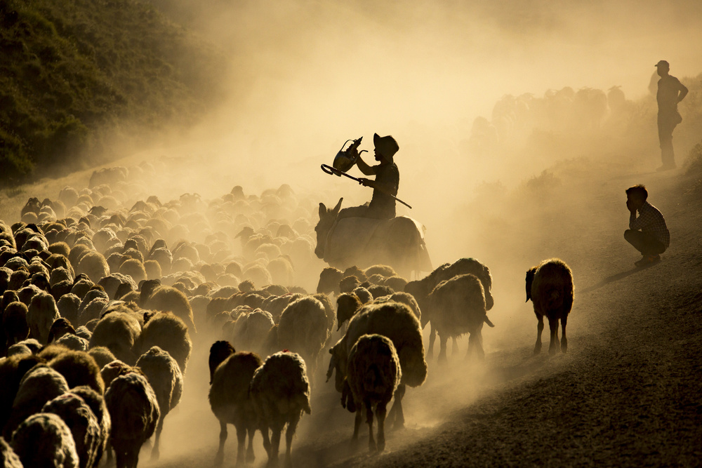 A piece of fine art art photography titled Herd by kahraman Bekcili